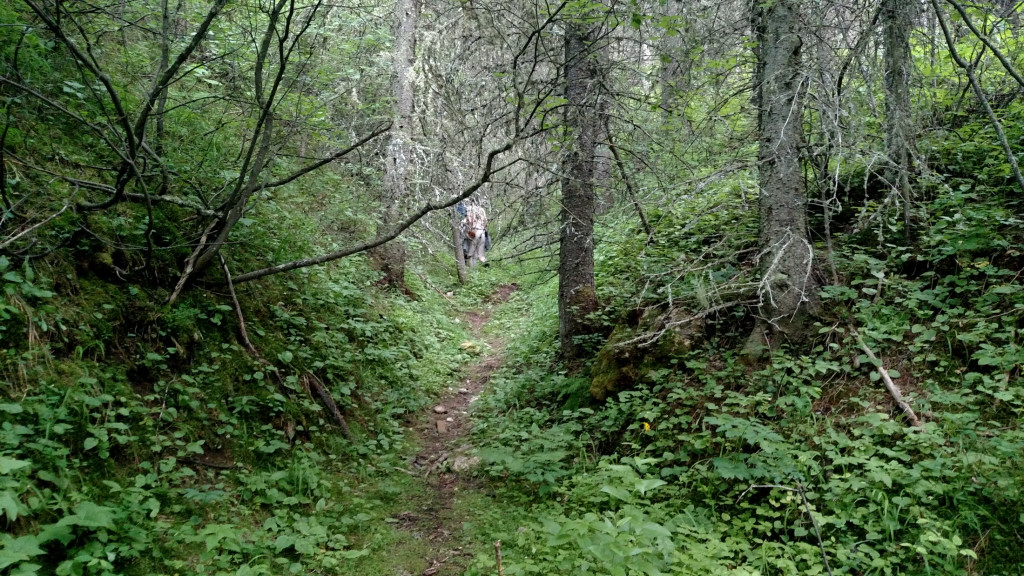 The trail leading into the gulch.