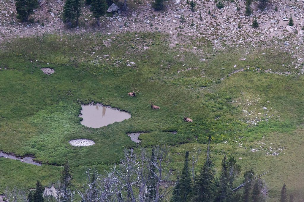 Right as we made it to the saddle we observed a group of bulls in the basin below us.