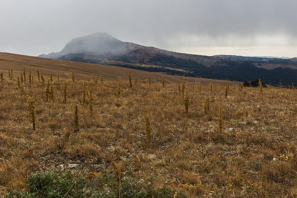 Looking south towards Black Butte from Gravelly Range Road.