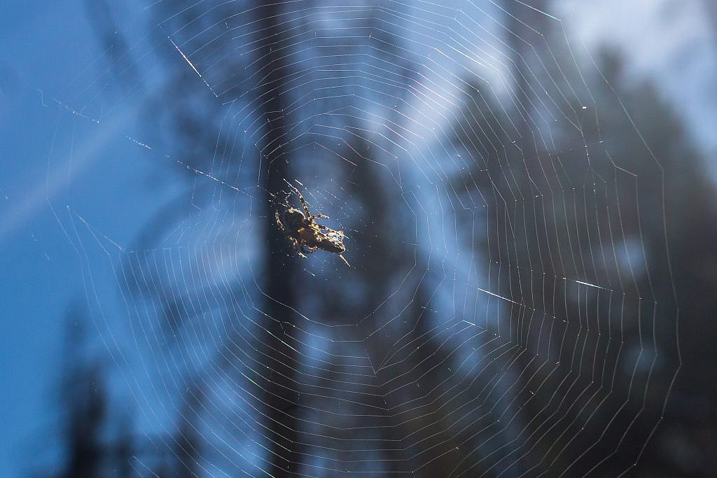 A spider and its prey.