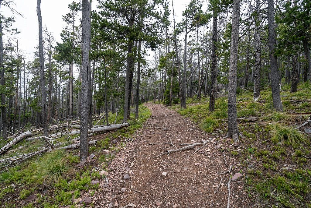 The majority of the hike is spent along this forested ridge.