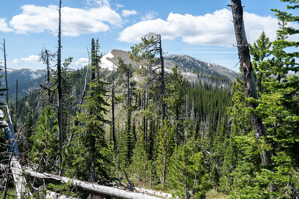 There's a little bit of bushwhacking through the last section of trees before ascending above the treeline.