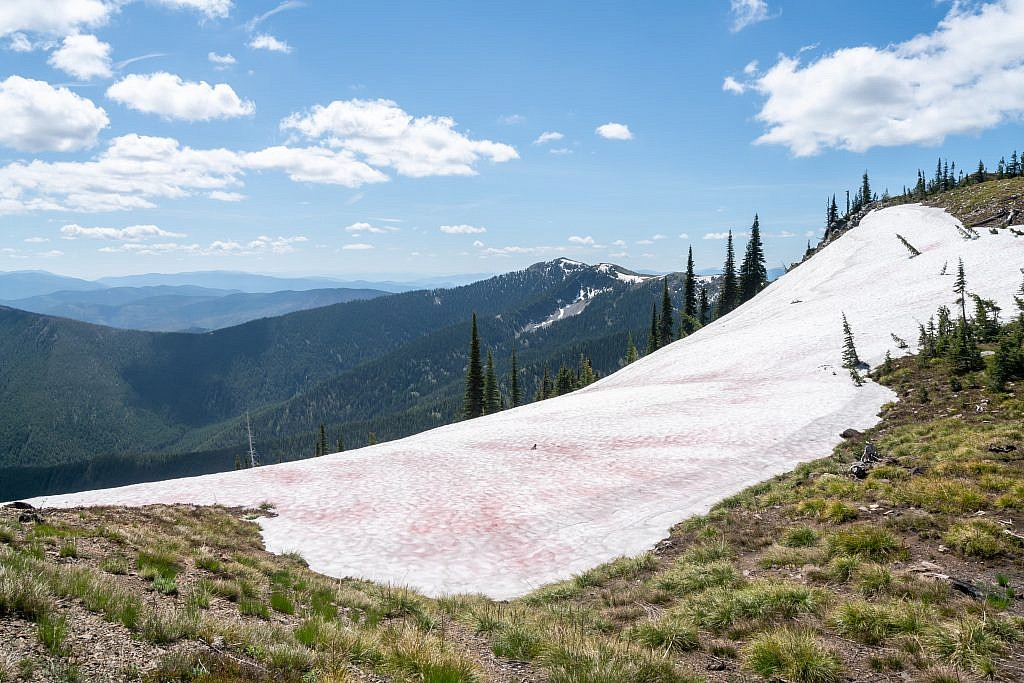 There were just a few patches of snow along the way. This one was covered in watermelon snow, a kind of green algae. Penrose Peak in the background.
