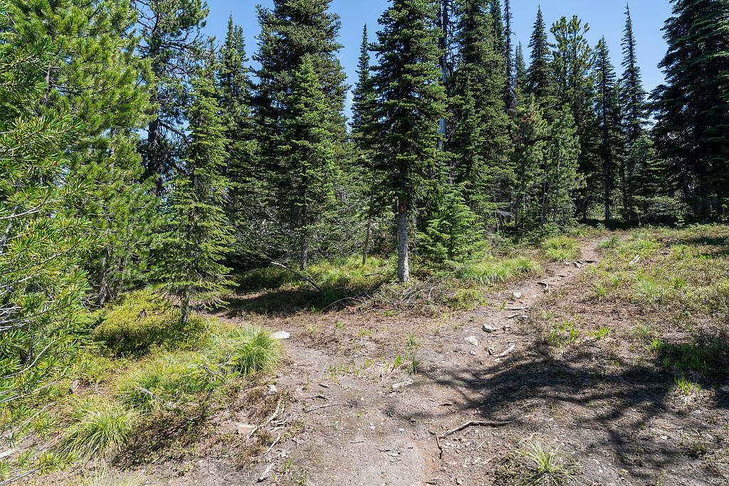 The fork in the trail. The main trail follows the right fork but you can follow the left fork to a viewpoint above Tuffy's Lake or even descend to the lake which looks like an excellent backpacking spot.